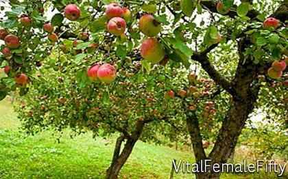 Old varieties of apples