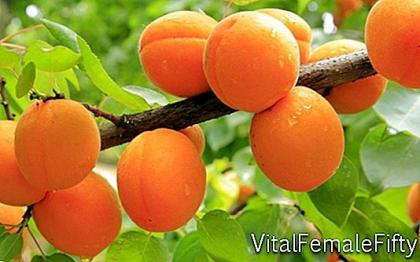 Apricot cultivation